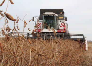 Уборку сои в Амурской области тормозит переувлажнение почвы