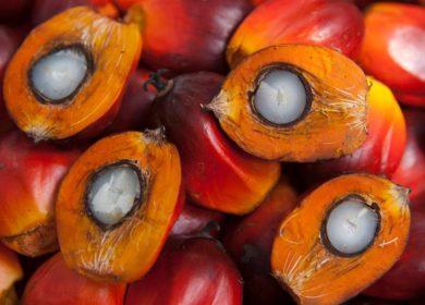 Индонезия сократила отгрузки пальмового масла в августе почти на 15%