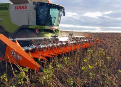 На Украине намололити уже 16,7 млн тонн подсолнечника, рапса и сои