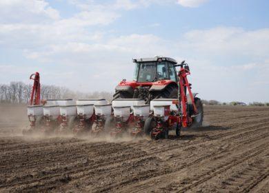 Дожди на территории Аргентины создали местным фермерам условия для увеличения темпов сева подсолнечника