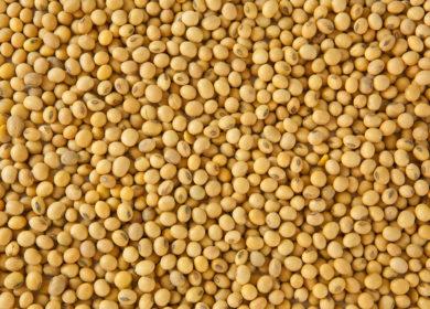 Китай рассчитывает избавиться от импортной зависимости на сою и расширить собственное производство масличной