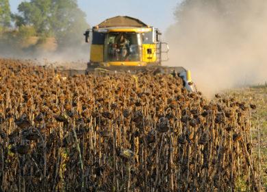 Производство масличных культур в России может составить почти 30 млн тонн к 2024 году