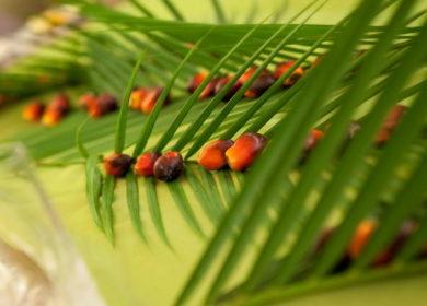 Пандемия COVID-19 негативно повлияла на экспорт пальмового масла из Индонезии