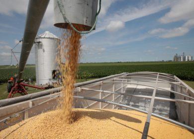 Аналитики снизили прогноз мирового производства сои
