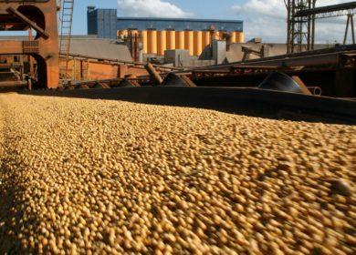 Парагвай экспортирует более 1 млн тонн соевых бобов до конца года