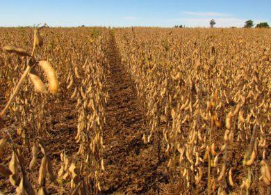 Засуха в Бразилии играет в пользу американским соеводам