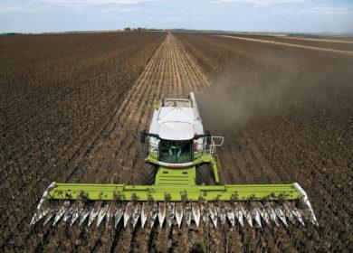 Более одного миллиона тонн масличных культур собрали аграрии Волгоградской области