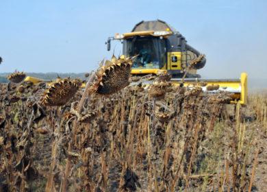 Башкирские фермеры приступили к завершающей фазе уборки масличных культур