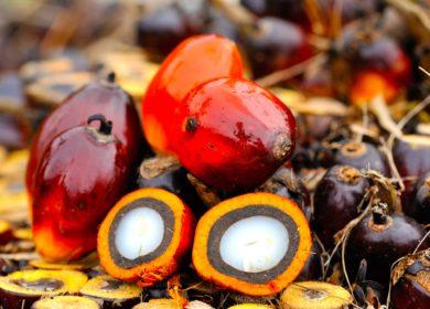 Россия увеличила импорт пальмового масла на 9,1% в I квартале т.г.