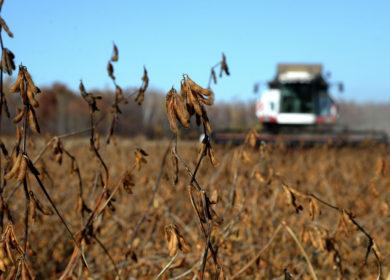 Аграриям Приморского края осталось убрать менее 30% урожая сои