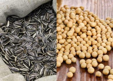 В Башкортостане наращивают экспорт семян масличных культур
