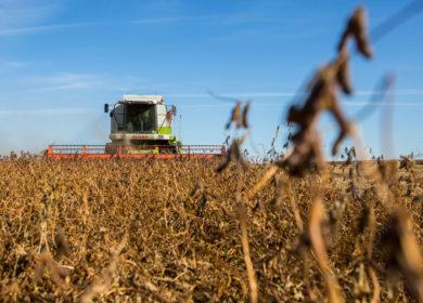 Минфин и Минэкономразвития выступили против упрощенного ввоза сои с ГМО