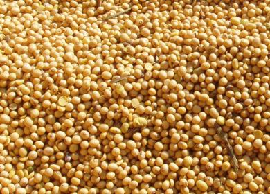 Фермер из Амурской области продал сою за 21 млн рублей, чтобы погасить задолженность