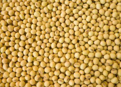 Россия импортировала практически 187 тыс. тонн соевых бобов в сентябре