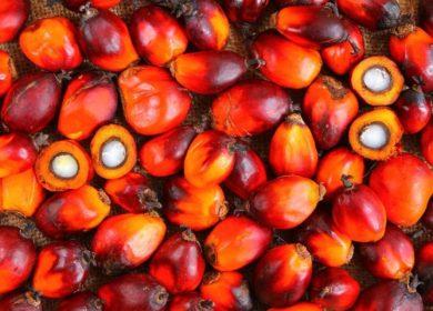 Референтная цена на индонезийское пальмовое масло выросла