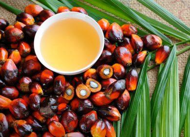 750 тыс. тонн пальмового масла импортировала Россия с января по сентябрь 2020 года