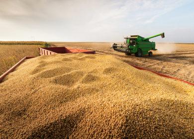 Менее 6% площадей под соей осталось убрать аграриям Приморского края