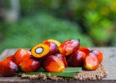Украина уменьшила закупку пальмового масла в I квартале 2021 г.