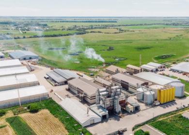 В «Экоойл» рассчитывают увеличивать объемы переработки подсолнечника