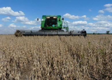 Аграрии Подмосковья планируют увеличить урожай масличных культур в 2021 году