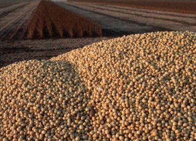 Бразилия в январе значительно уменьшила экспорт соевых бобов