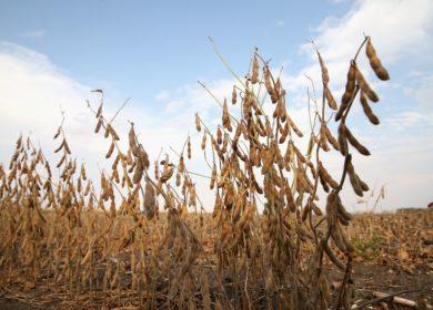 Прогноз мирового экспорта сои в февральском отчете USDA вырос еще на 600 тыс. тонн