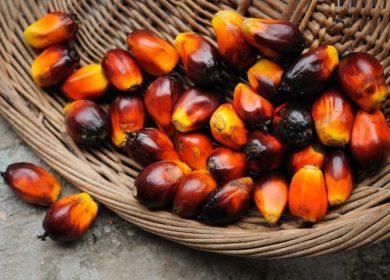 Экспортная пошлина на пальмовое масло в Малайзии в феврале останется на прежнем уровне