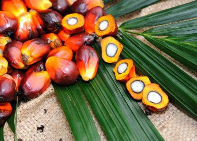 Экспорт пальмового масла из Малайзии в Индию в марте вырос более чем в 25 раз