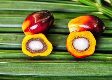 Украина импортировала более 187 тыс. тонн пальмового масла с января по ноябрь 2020 г.