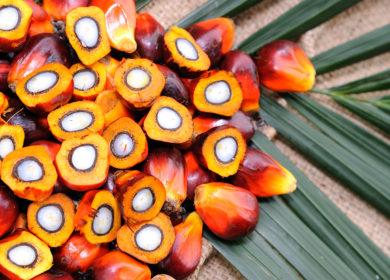 Малайзия может увеличить экспорт пальмового масла в Китай