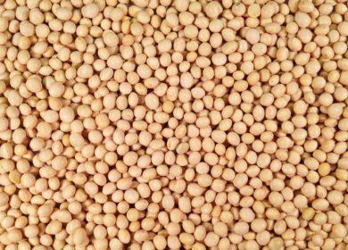 Приамурье недополучает по 2 млрд рублей с каждых 100 тыс. тонн вывезенной непереработанной сои
