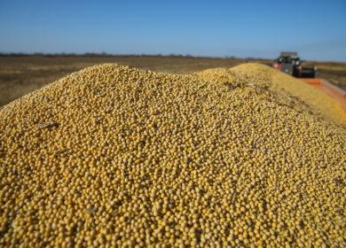 Экспорт сои и соевого масла из Бразилии в сентябре сократился по сравнению с прошлым месяцем