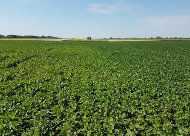 В Аргентине улучшилось состояние посевов сои