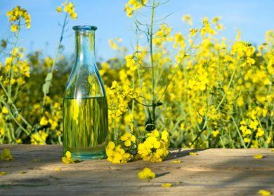 Россия в 2021 г. увеличила экспорт рапсового масла на 14%