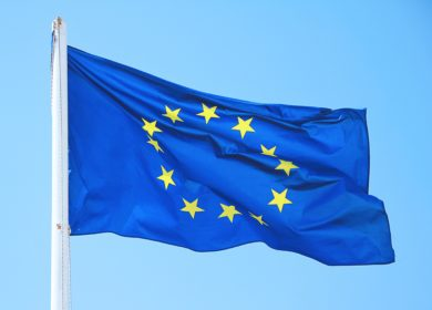 Евросоюз закупил более 8 млн тонн масличных и продуктов их переработки в новом сезоне
