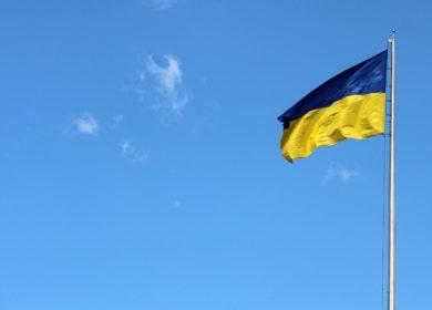 На Украине цены на сою растут, а на подсолнечник опускаются
