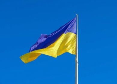 Украина. Экспортные цены на рапс нового урожая — 595-605 USD/тонна