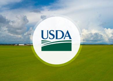 Европейский Союз: Ежегодный обзор рынка масличных культур и продуктов переработки (оценка USDA)