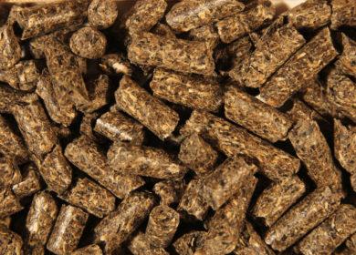 Башкирия экспортировала практически 45 тыс. тонн подсолнечного шрота в 2021 г.