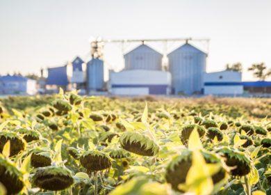 Семена остаются дома. Россия на треть уменьшила реализацию масличных на внешние рынки в 2021 г.