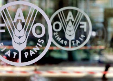 В июне Индекс цен на растительные масла снизился после двенадцати месяцев роста — ФАО ООН